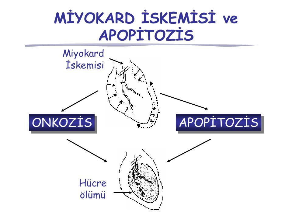 MİYOKARD İSKEMİSİ ve APOPİTOZİS