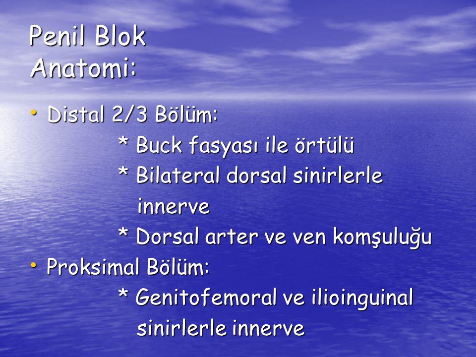 Penil Blok Anatomi: Distal 2/3 Bölüm: * Buck fasyası ile örtülü
