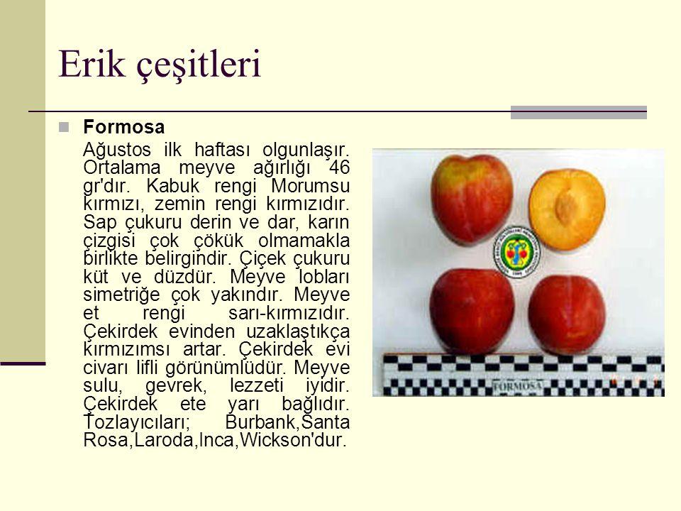 Erik çeşitleri Formosa