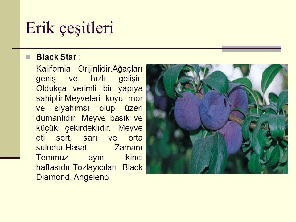 Erik çeşitleri Black Star :