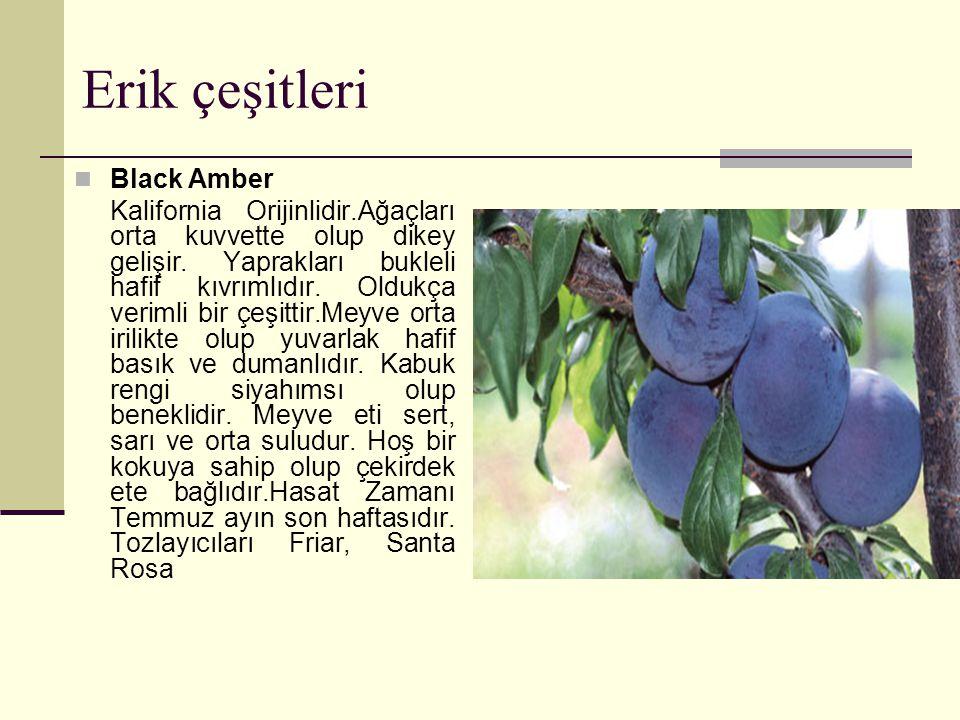 Erik çeşitleri Black Amber