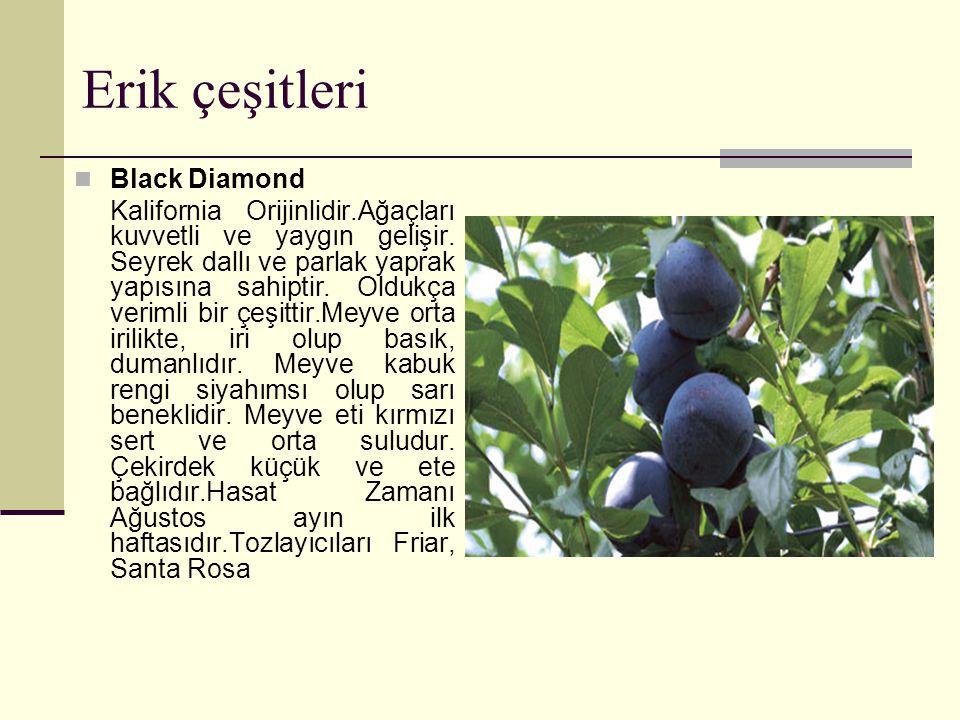 Erik çeşitleri Black Diamond
