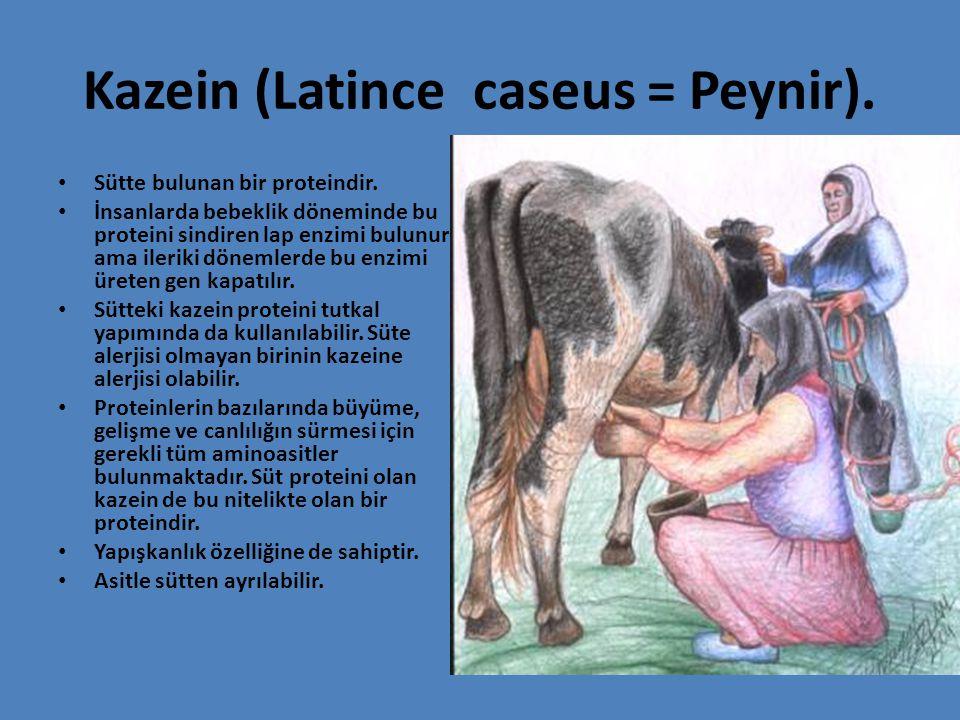 Kazein (Latince caseus = Peynir).