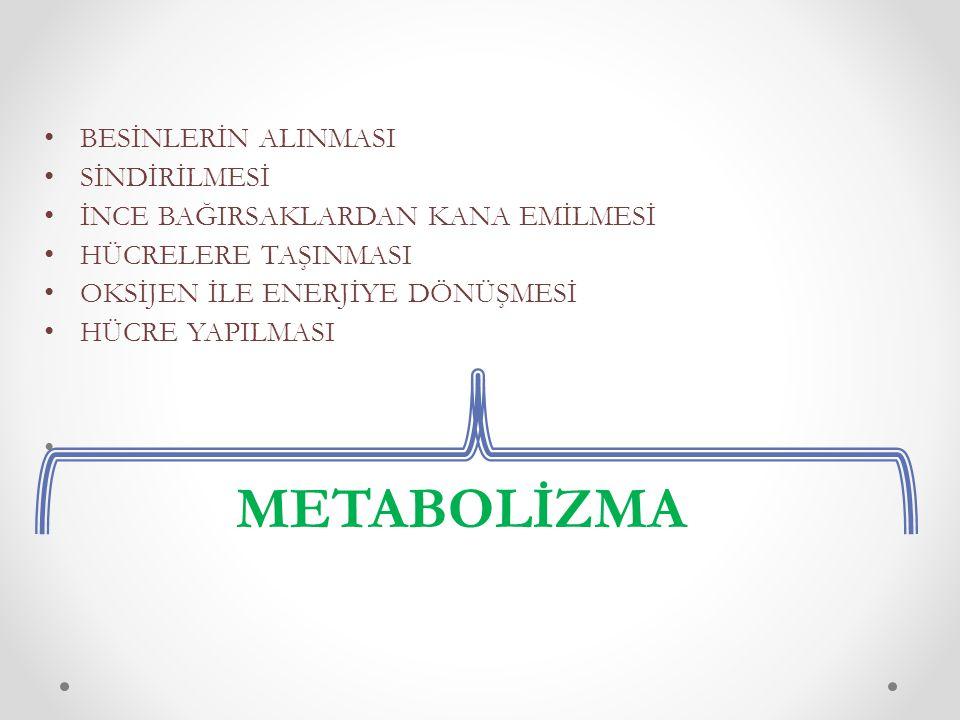 METABOLİZMA BESİNLERİN ALINMASI SİNDİRİLMESİ