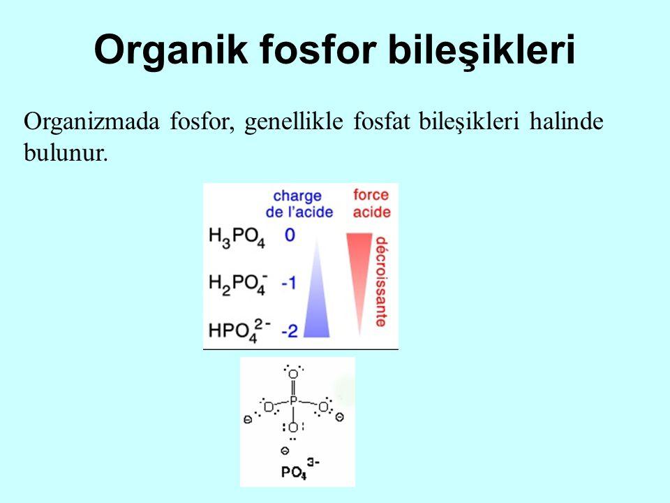 Organik fosfor bileşikleri
