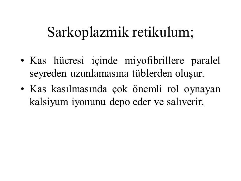 Sarkoplazmik retikulum;