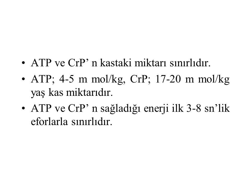 ATP ve CrP' n kastaki miktarı sınırlıdır.