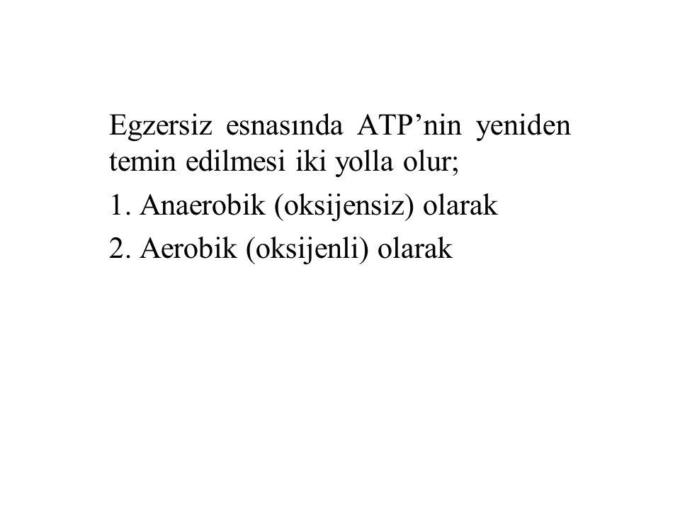 Egzersiz esnasında ATP'nin yeniden temin edilmesi iki yolla olur;