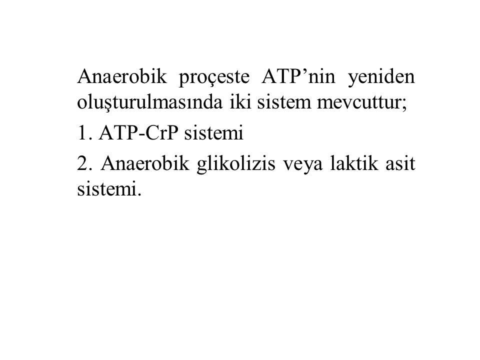 Anaerobik proçeste ATP'nin yeniden oluşturulmasında iki sistem mevcuttur;