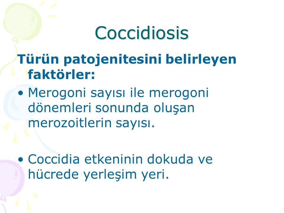 Coccidiosis Türün patojenitesini belirleyen faktörler: