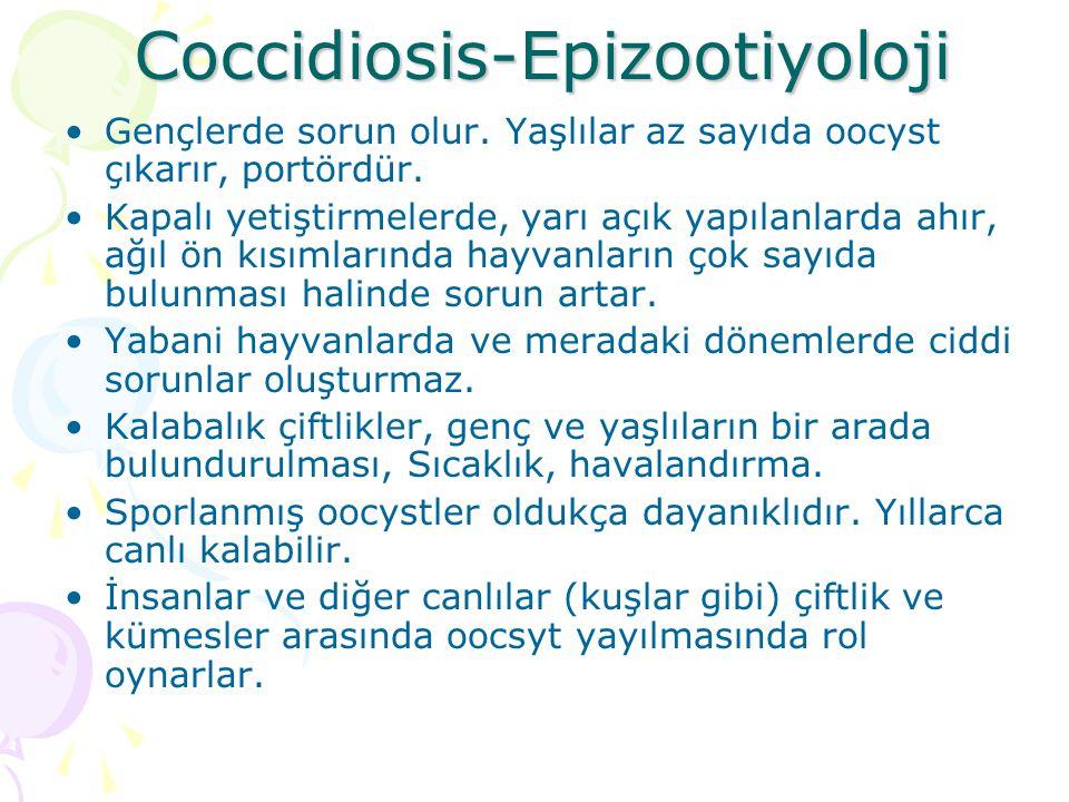Coccidiosis-Epizootiyoloji