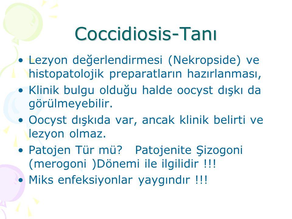 Coccidiosis-Tanı Lezyon değerlendirmesi (Nekropside) ve histopatolojik preparatların hazırlanması,