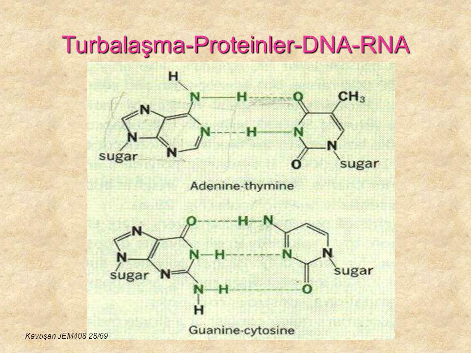 Turbalaşma-Proteinler-DNA-RNA