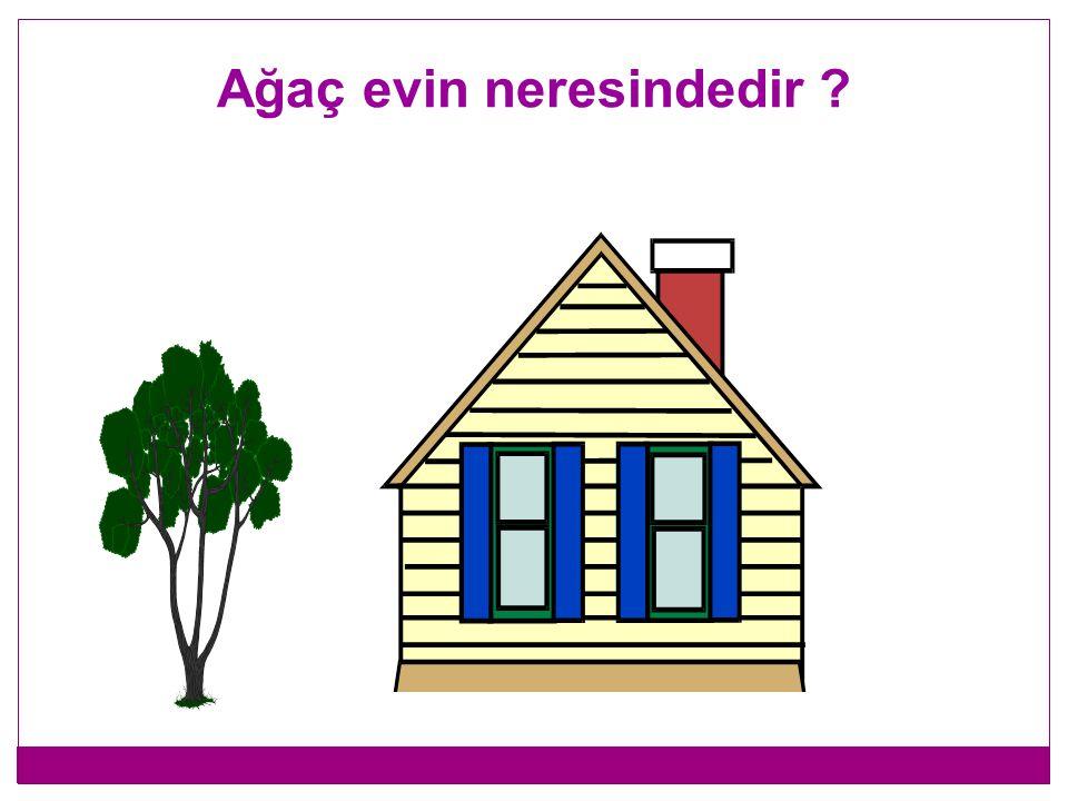 Ağaç evin neresindedir