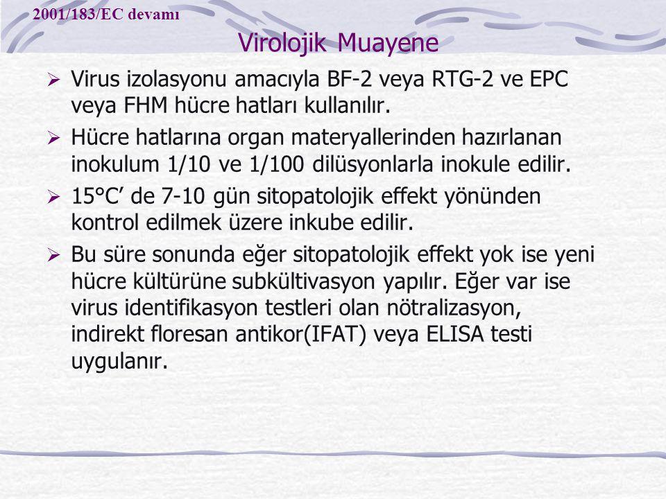Virolojik Muayene 2001/183/EC devamı. Virus izolasyonu amacıyla BF-2 veya RTG-2 ve EPC veya FHM hücre hatları kullanılır.