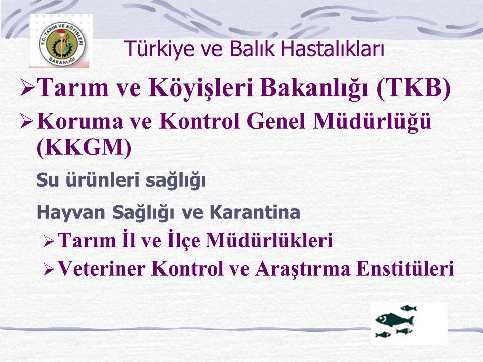 Türkiye ve Balık Hastalıkları