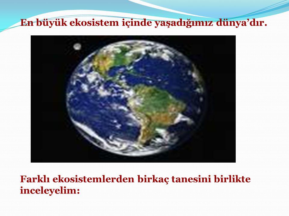 En büyük ekosistem içinde yaşadığımız dünya'dır.