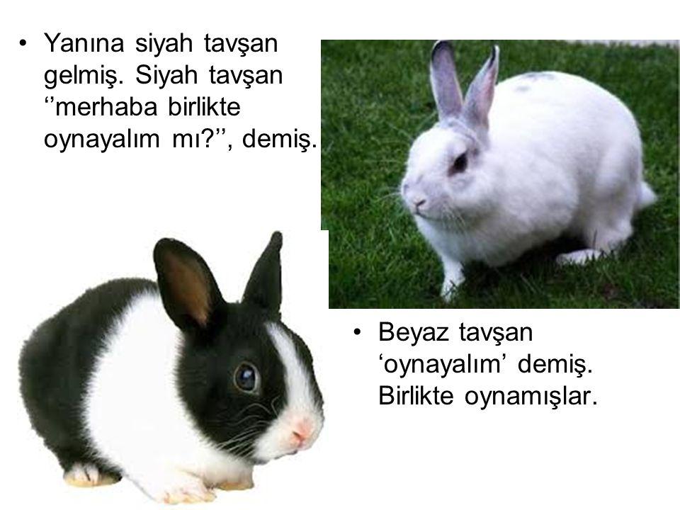 Yanına siyah tavşan gelmiş