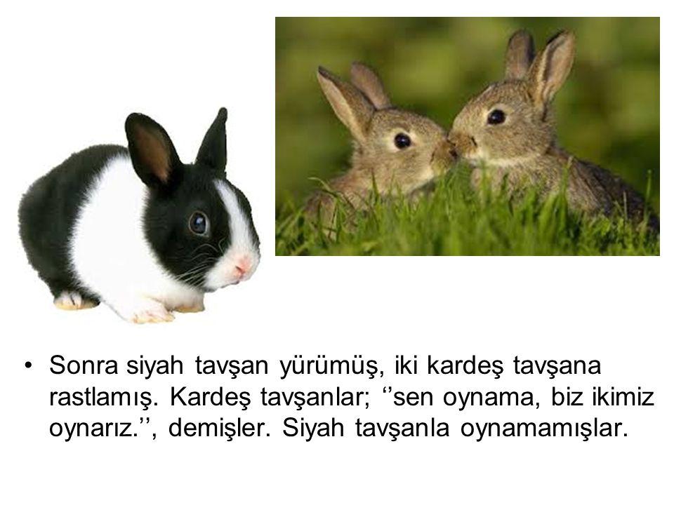 Sonra siyah tavşan yürümüş, iki kardeş tavşana rastlamış