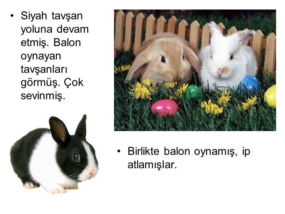 Siyah tavşan yoluna devam etmiş. Balon oynayan tavşanları görmüş