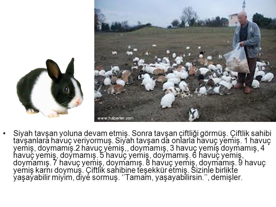 Siyah tavşan yoluna devam etmiş. Sonra tavşan çiftliği görmüş