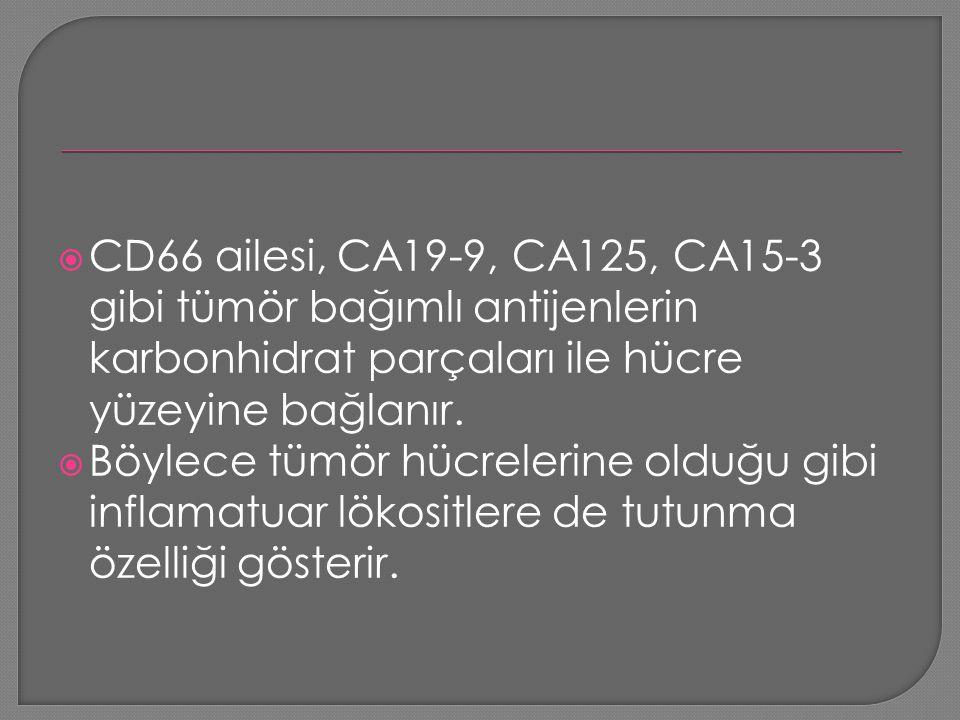CD66 ailesi, CA19-9, CA125, CA15-3 gibi tümör bağımlı antijenlerin karbonhidrat parçaları ile hücre yüzeyine bağlanır.