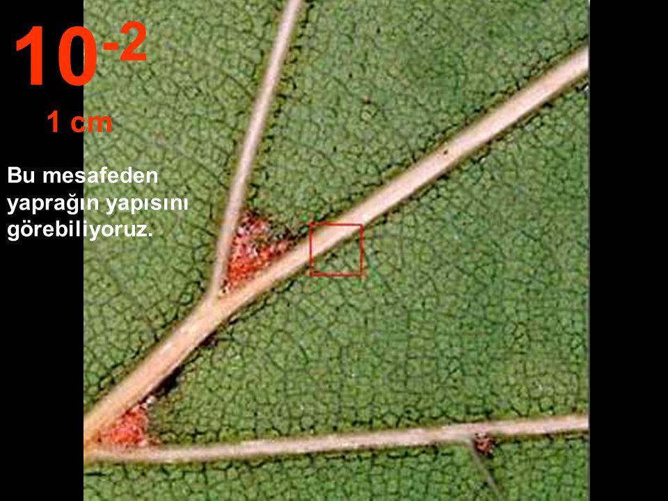 10-2 1 cm Bu mesafeden yaprağın yapısını görebiliyoruz.