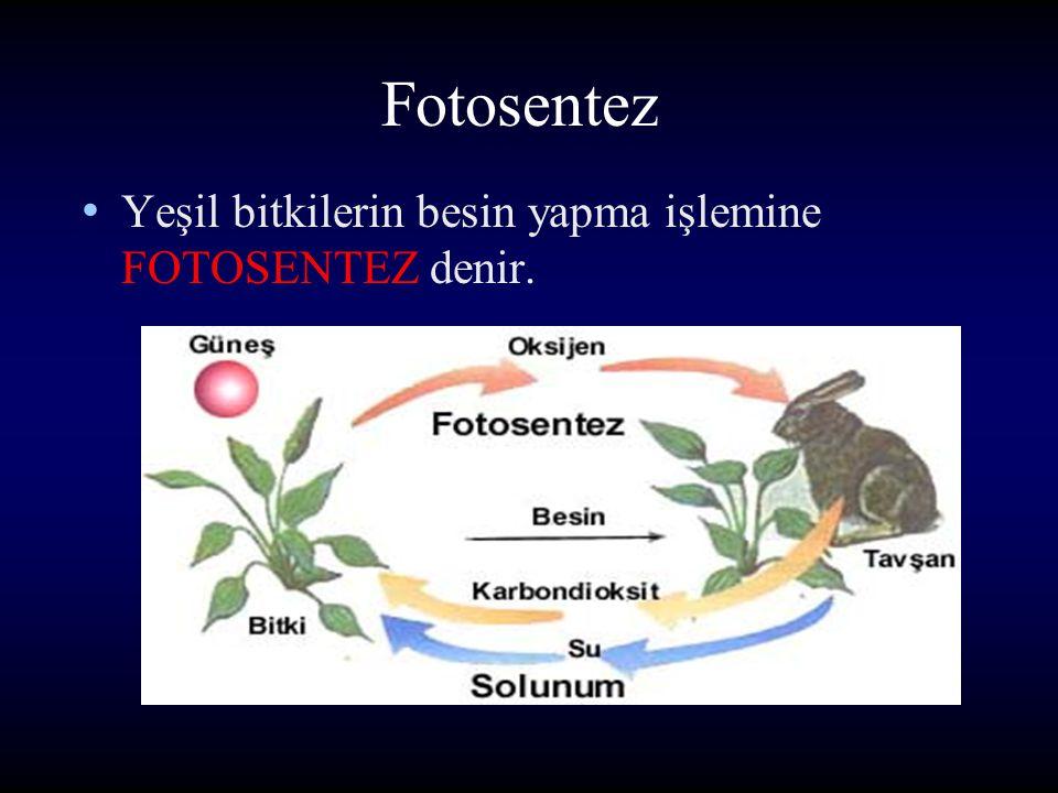 Fotosentez Yeşil bitkilerin besin yapma işlemine FOTOSENTEZ denir.