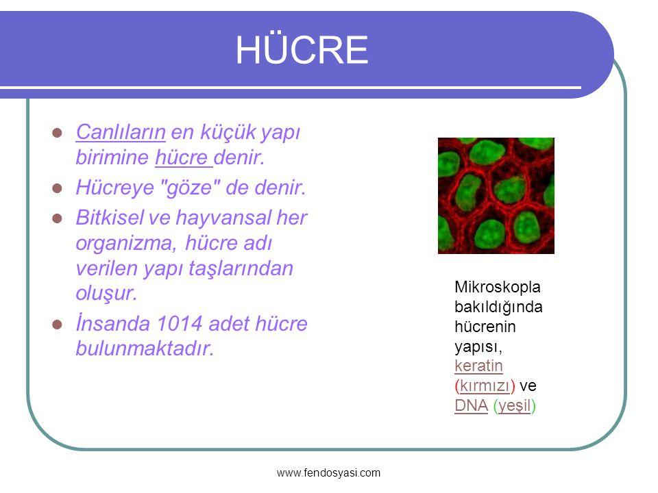 HÜCRE Canlıların en küçük yapı birimine hücre denir.