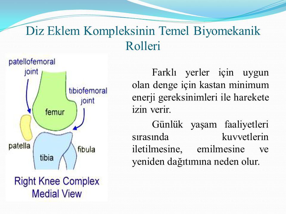 Diz Eklem Kompleksinin Temel Biyomekanik Rolleri