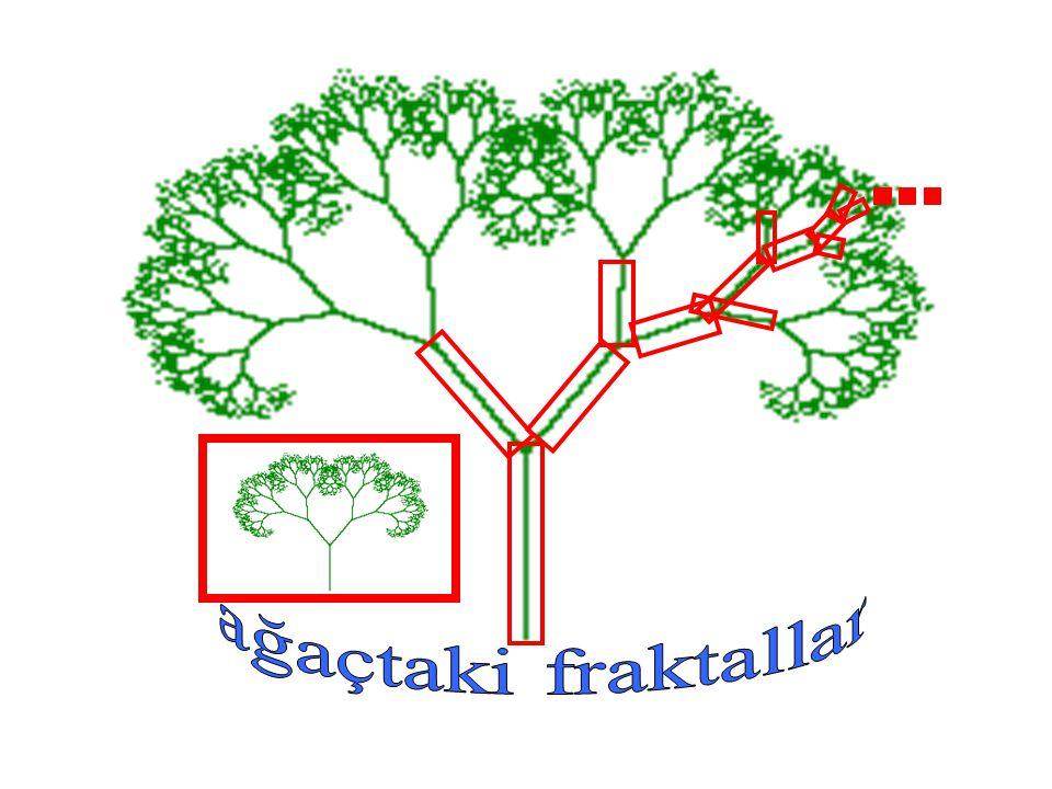 ağaçtaki fraktallar