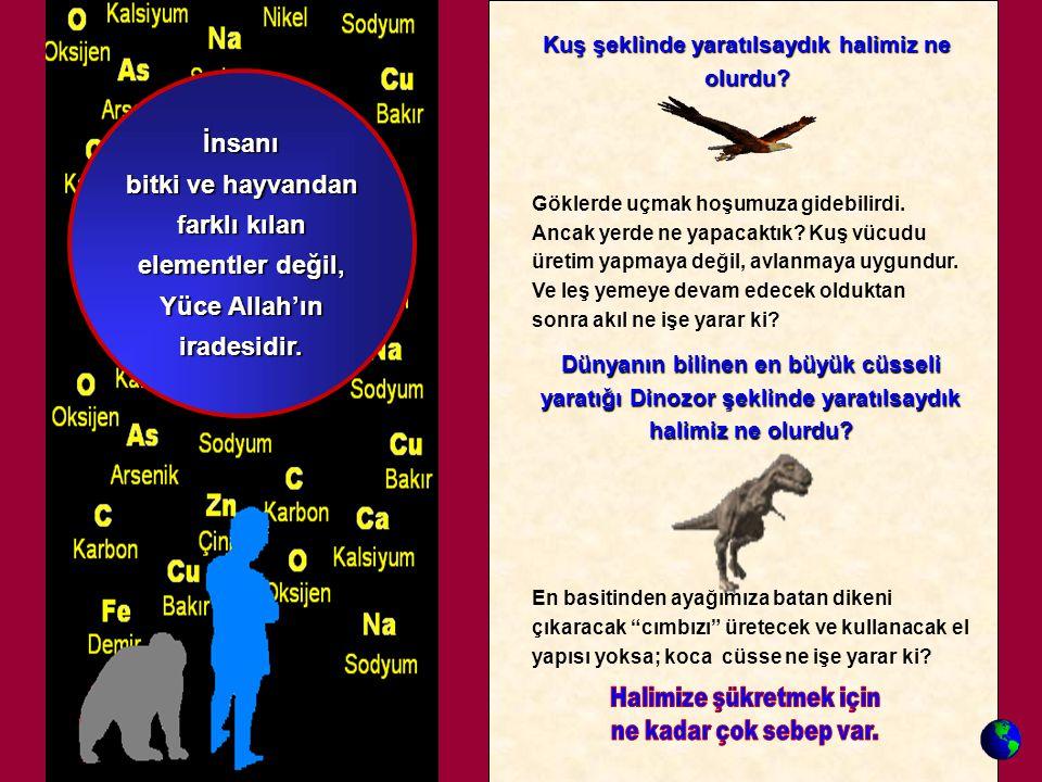 Kuş şeklinde yaratılsaydık halimiz ne olurdu