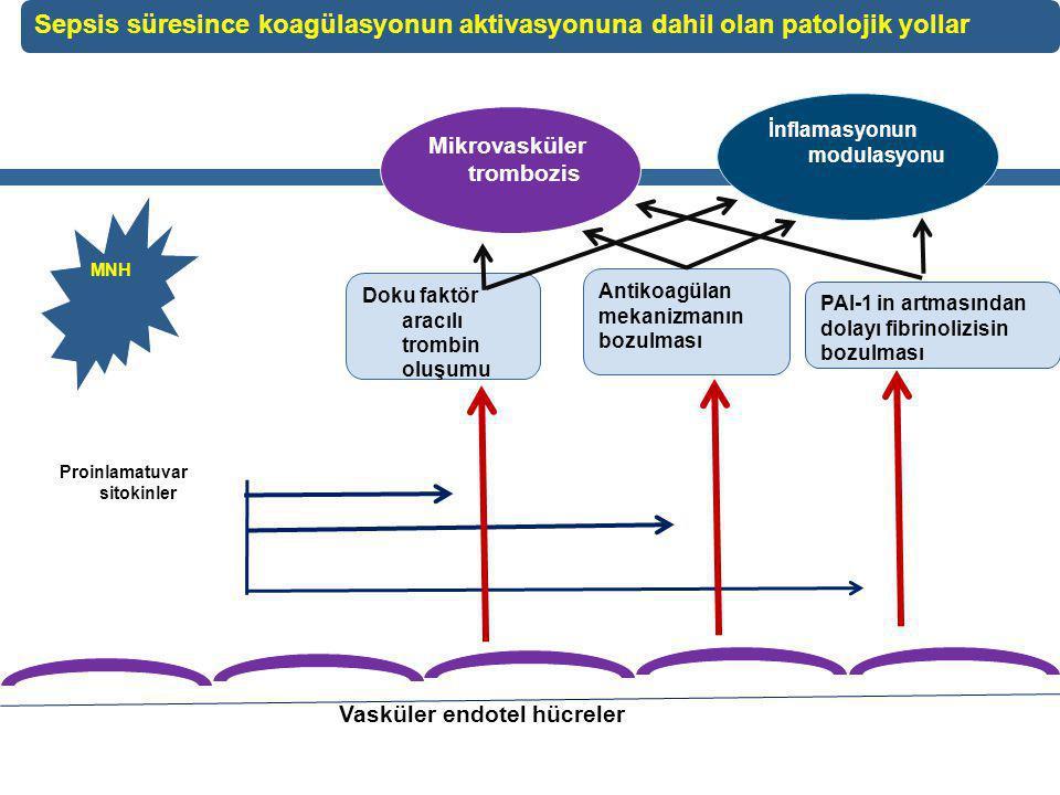 Sepsis süresince koagülasyonun aktivasyonuna dahil olan patolojik yollar