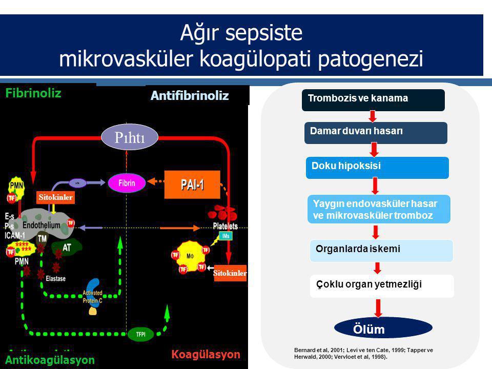 Ağır sepsiste mikrovasküler koagülopati patogenezi