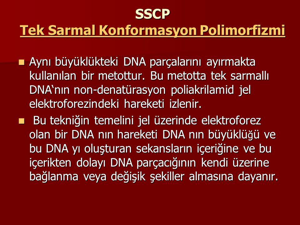 SSCP Tek Sarmal Konformasyon Polimorfizmi