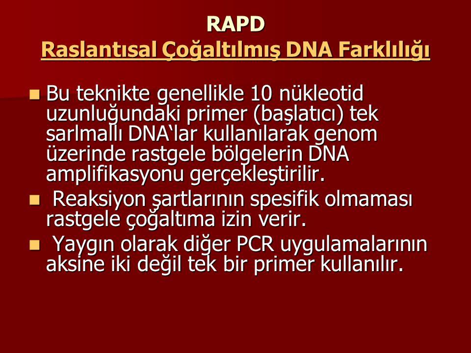 RAPD Raslantısal Çoğaltılmış DNA Farklılığı