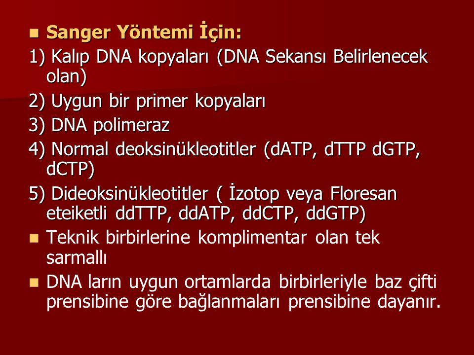 Sanger Yöntemi İçin: 1) Kalıp DNA kopyaları (DNA Sekansı Belirlenecek olan) 2) Uygun bir primer kopyaları.