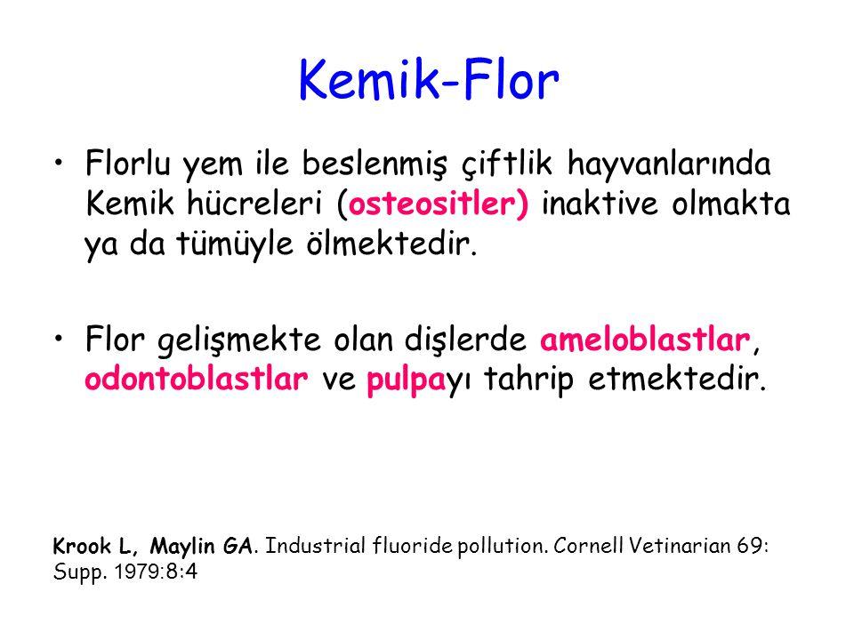 Kemik-Flor Florlu yem ile beslenmiş çiftlik hayvanlarında Kemik hücreleri (osteositler) inaktive olmakta ya da tümüyle ölmektedir.