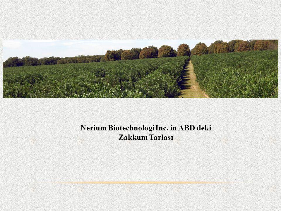 Nerium Biotechnologi Inc. in ABD deki Zakkum Tarlası