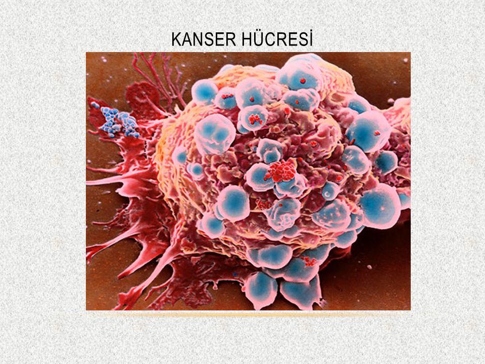 Kanser Hücresİ
