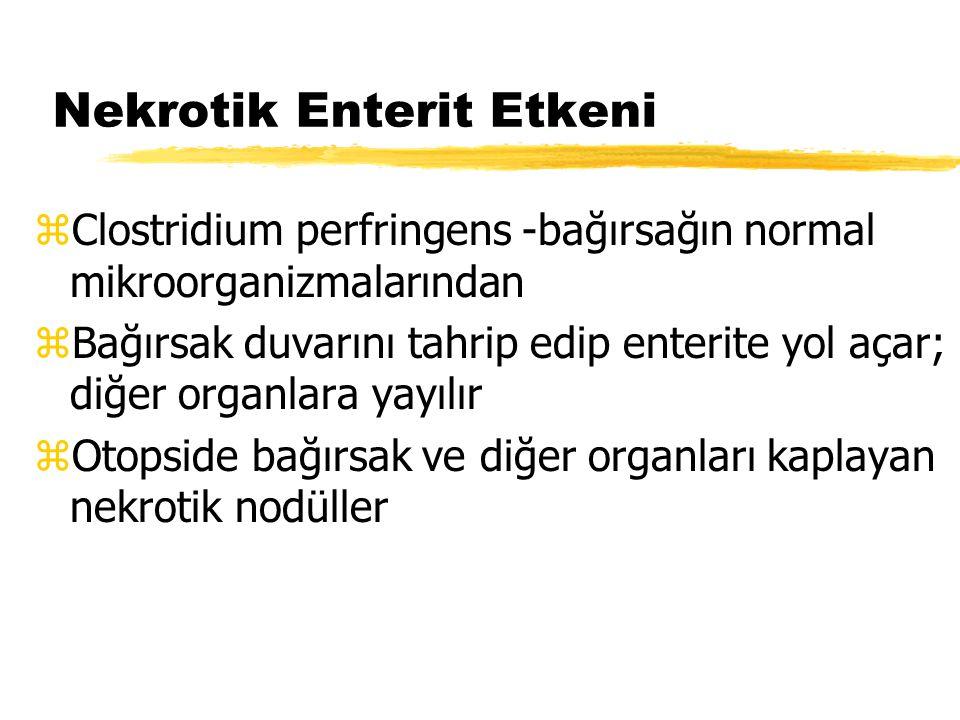 Nekrotik Enterit Etkeni