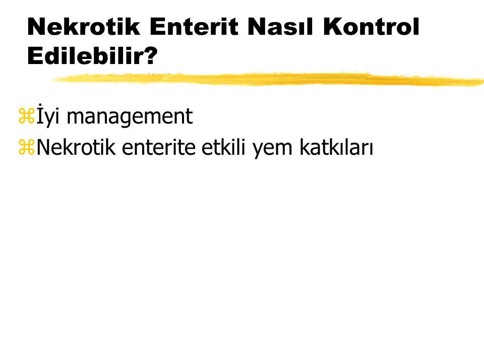 Nekrotik Enterit Nasıl Kontrol Edilebilir