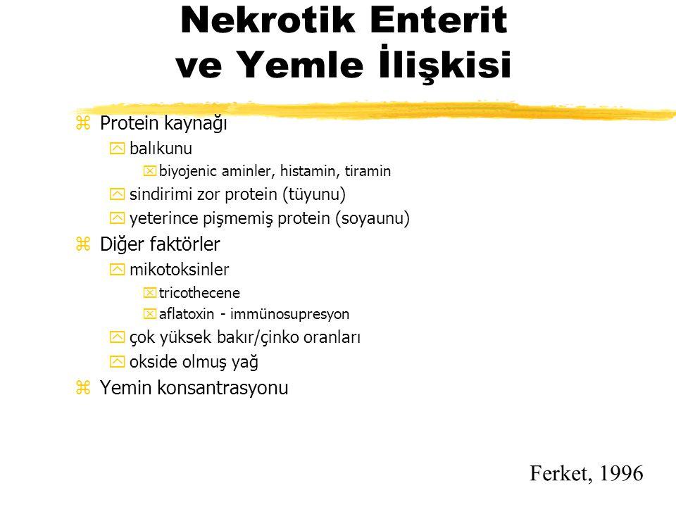 Nekrotik Enterit ve Yemle İlişkisi