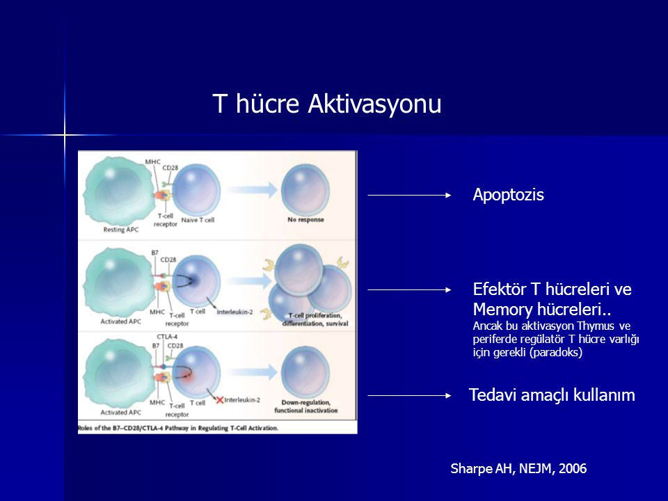 T hücre Aktivasyonu Apoptozis Efektör T hücreleri ve