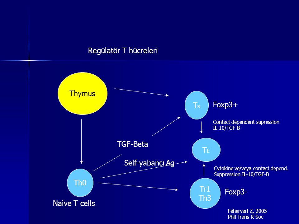 Regülatör T hücreleri Thymus TR Foxp3+ TGF-Beta TE Self-yabancı Ag Th0
