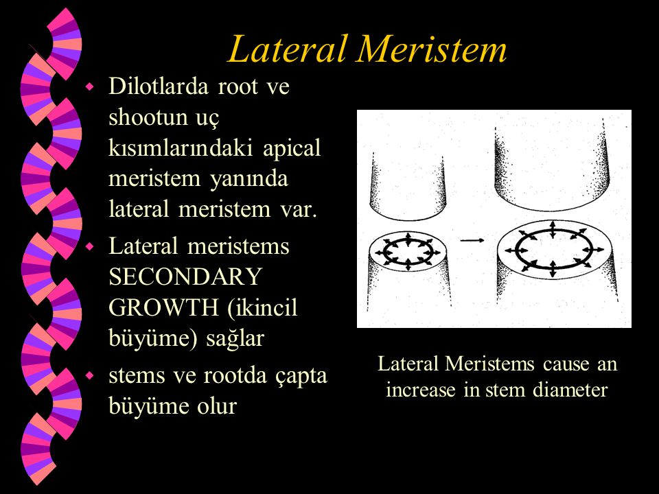 Lateral Meristems cause an increase in stem diameter