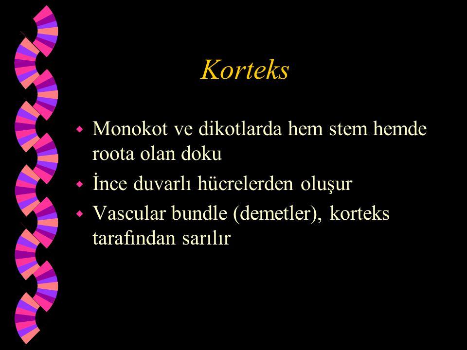 Korteks Monokot ve dikotlarda hem stem hemde roota olan doku