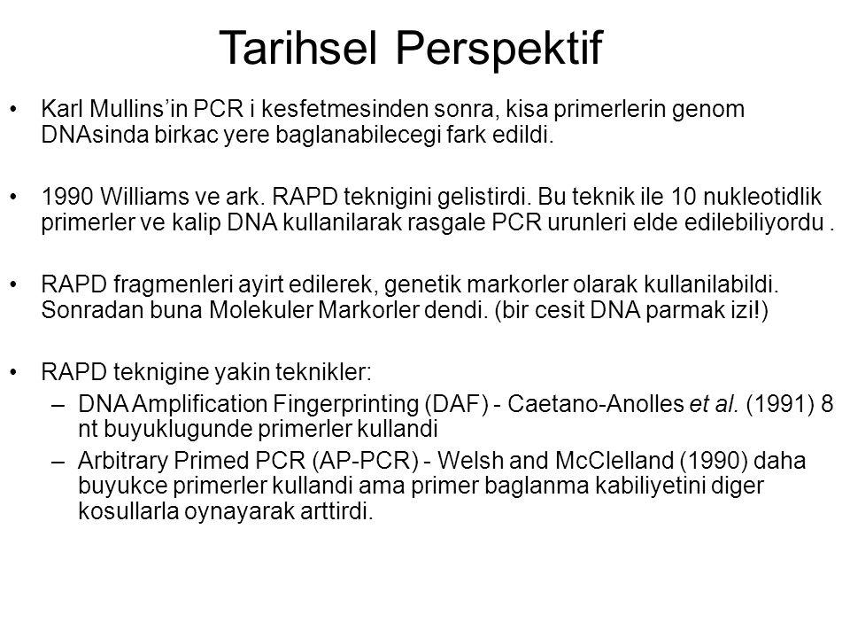 Tarihsel Perspektif Karl Mullins'in PCR i kesfetmesinden sonra, kisa primerlerin genom DNAsinda birkac yere baglanabilecegi fark edildi.