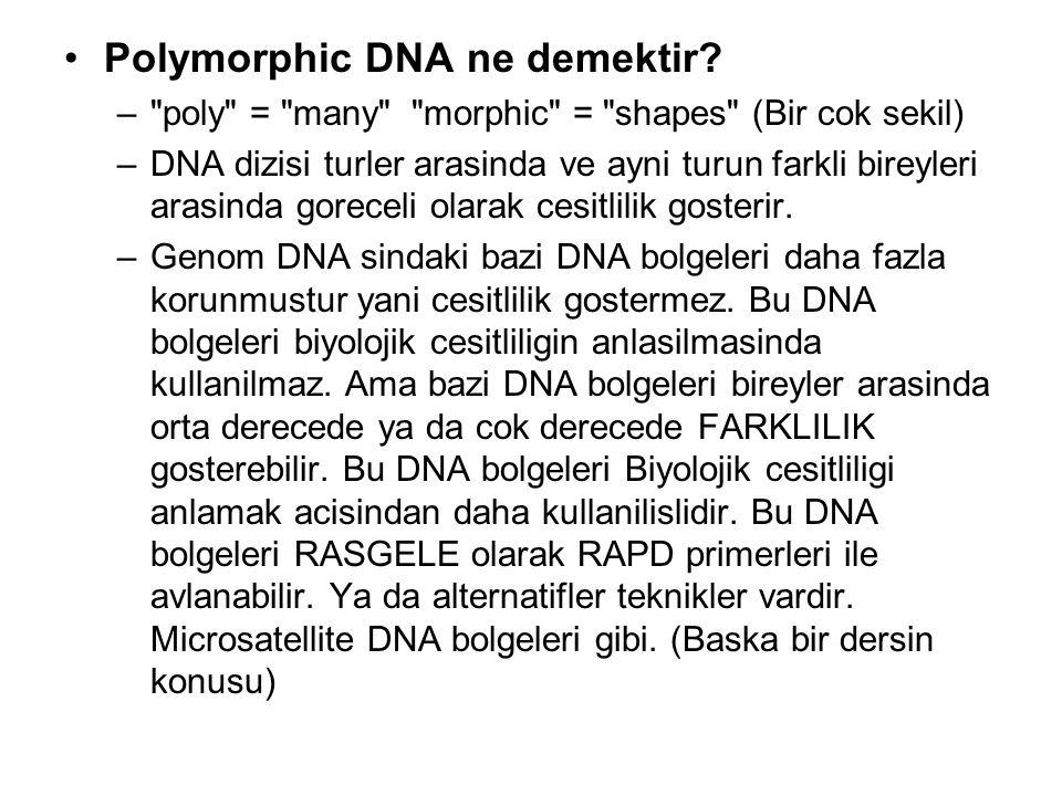 Polymorphic DNA ne demektir