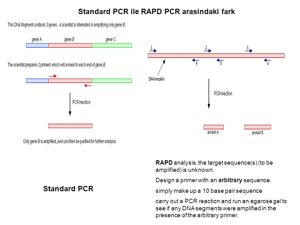 Standard PCR ile RAPD PCR arasindaki fark
